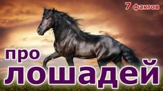 7 фактов про лошадей